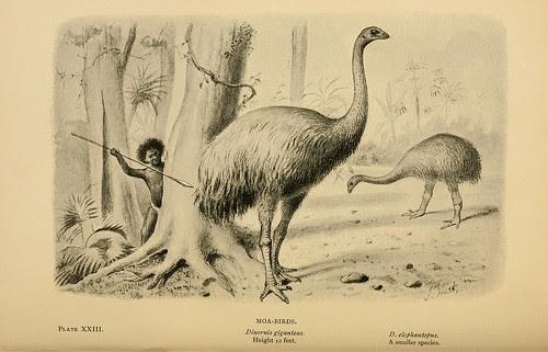 Moa-Birds