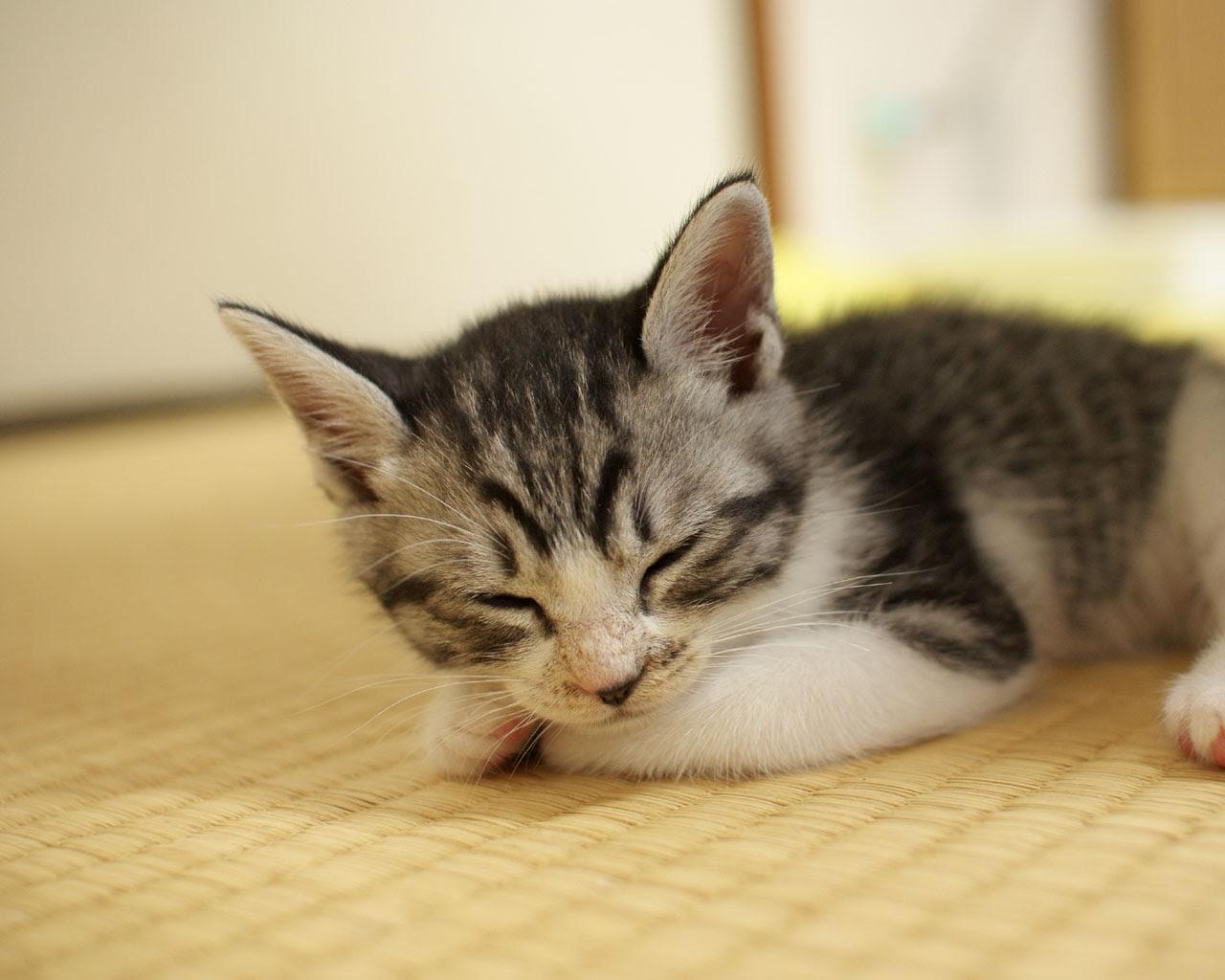 猫3匹の壁紙 猫にこんばんは