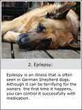photo GermanShepherdproblems-2a_zpse2bd05e4.jpg