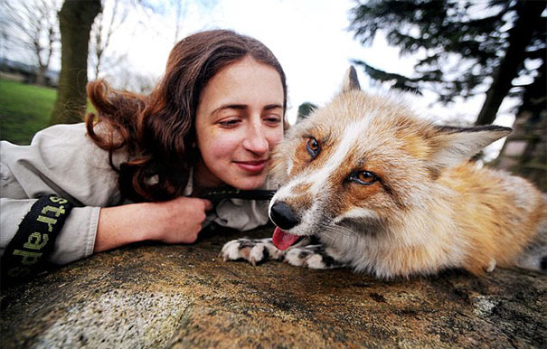 rescued-tame-pet-fox-cub-todd-emma-dsylva-2