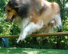 Toonie loves to jump