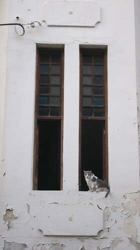 Fat Cat, Rashi, Tel Aviv by TheLostSociety