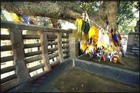Bodhi Tree,Bodhgaya, Bodhgaya Pilgrimage, Bodhgaya Tourism, Bodhgaya Tour, Visit Bodhgaya, Bodhgaya tour, Bodhgaya Hotels