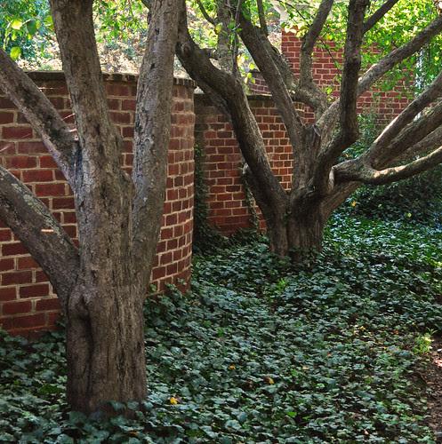 Serpentine Walls (2)