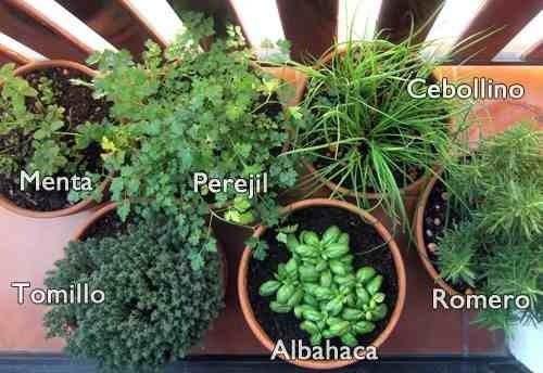 Siembra de semillas de plantas arom ticas for Cultivo de plantas aromaticas y especias