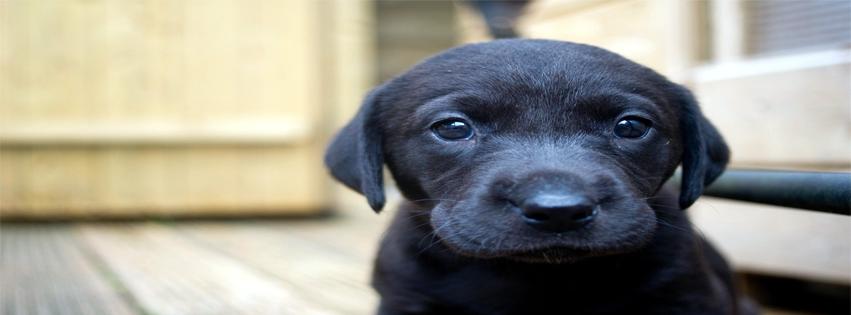 Capa para facebook cachorro