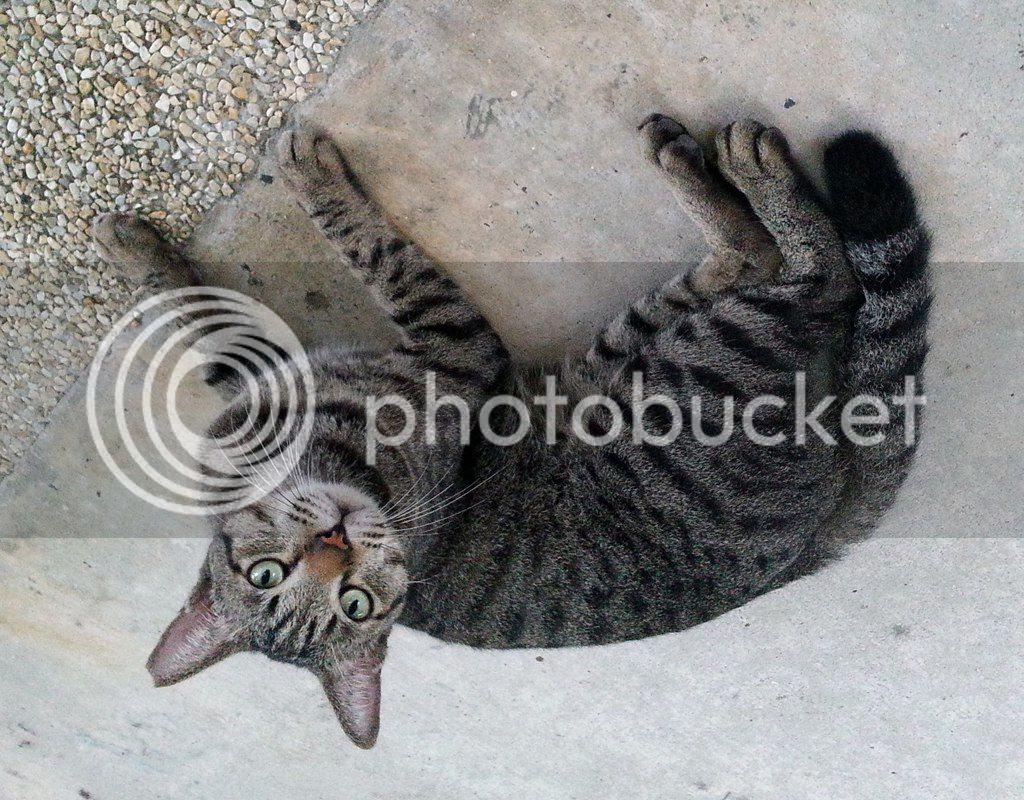 photo CatJRT14Aug04.jpg