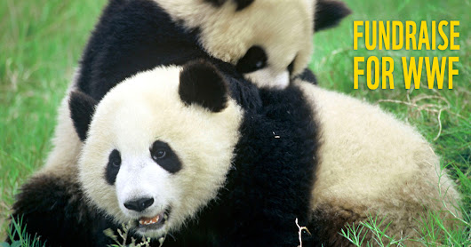 Panda Nation | Fundraise for WWF - Your Way