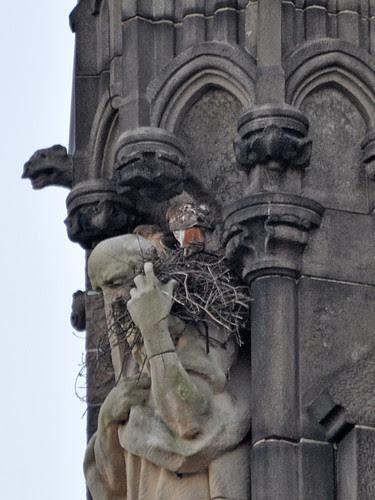 Nest Switch-Off