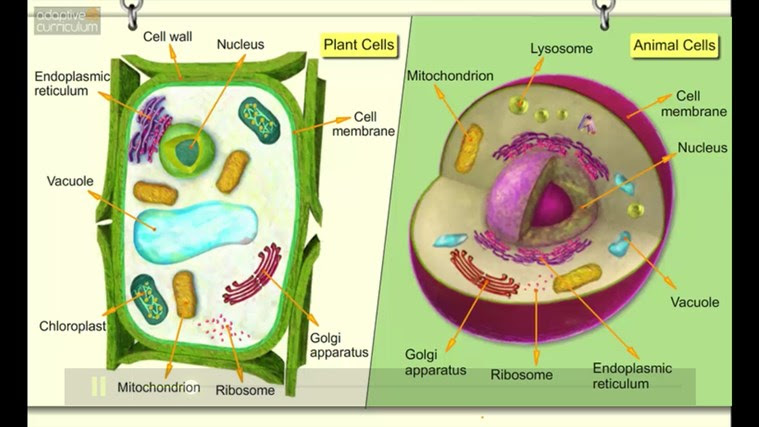 AC Life Science: Comparing Plant and Animal Cells snímek obrazovky 5