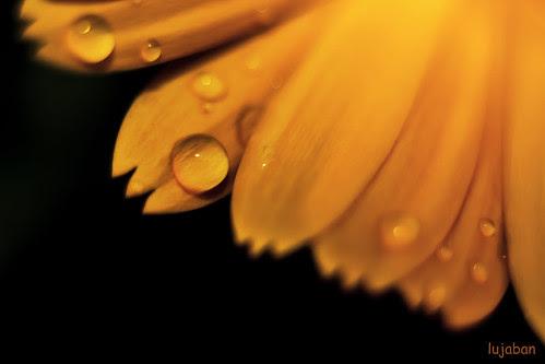 A drop... by lujaban