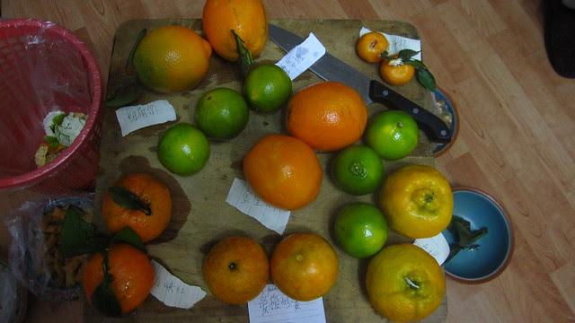 Orange sampler platter, Thanksgiving 2010
