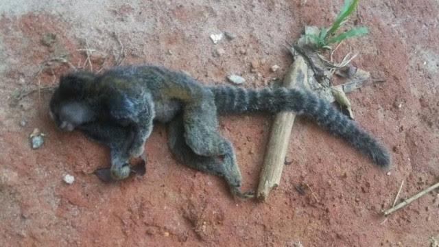 O animal foi levado para verificação da causa da morte: resultado sai nos próximos dias