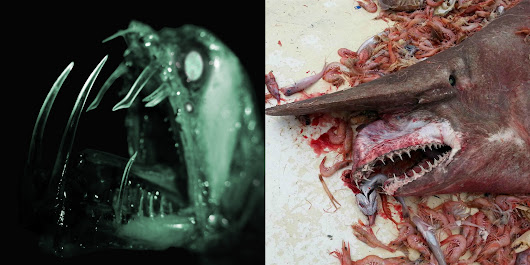 15 Disturbing Creatures To Come Out Of The Ocean