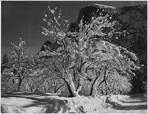 Ansel Adams: Half Dome, Apple Orchard, Yosemit...
