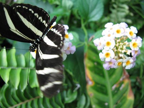 Butterfly House, Museum de Sciencia Granada