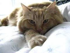 Jasper hogging the bed