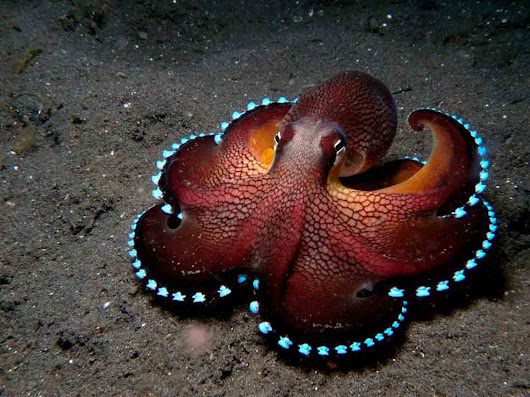 SCIENTISTS CONCLUDE OCTUPUS DNA IS NOT FROM THIS WORLD