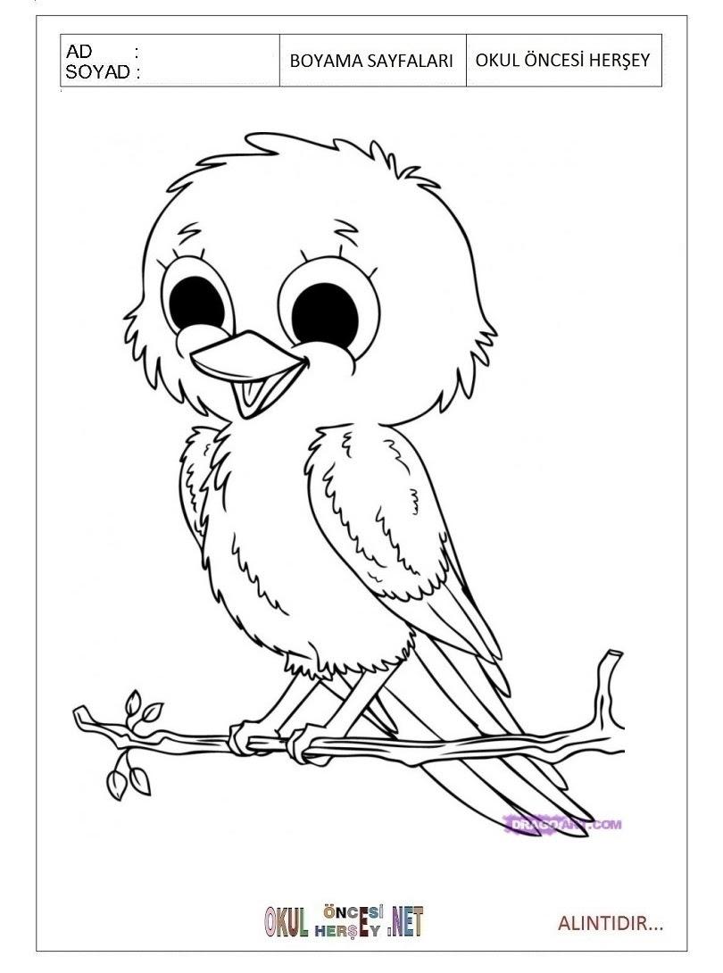 Kuş Boyama Sayfaları