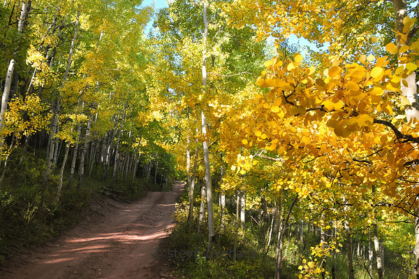 More aspen fall color goodness along the road.