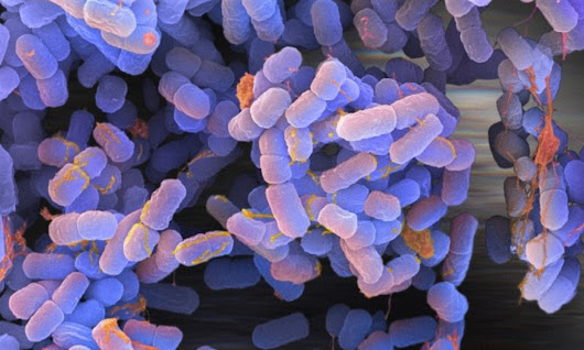 Scientists introduce unnatural DNA molecules to E.coli bacteria