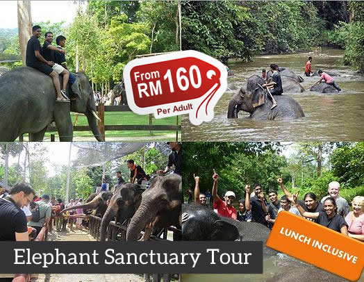 Kuala Gandah Elephant Sanctuary Tour Package & Price From KL - MyTravelLane