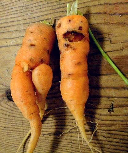 carrot couple