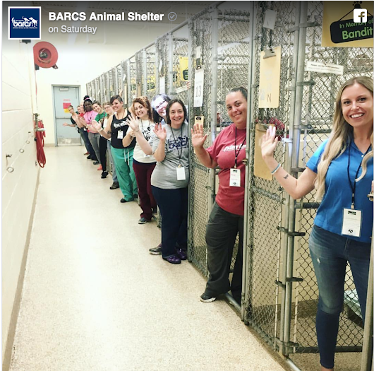 """Happy tears"" As 45,000 Pets Find Homes During Clear the Shelters Event"