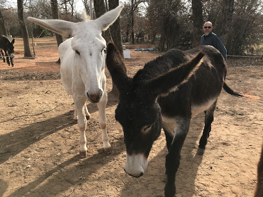 The Amazing Benefits of Donkey Milk Will Blow Your Mind