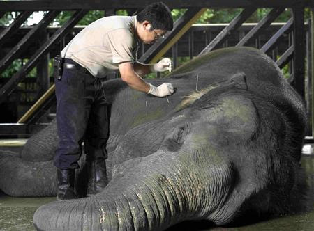 Singapore zoo heals animals with herbs, acupuncture | Reuters