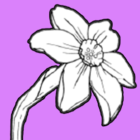 How To Draw A Narcissus Or Daffodil Flower With Easy Step By Step Drawing Lesson How To Draw Dat