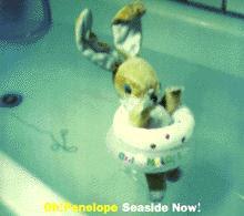 Resultado de imagen para Oh! Penelope Seaside now