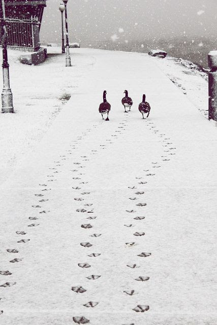 116 best Animal tracks images on Pinterest | Animal tracks, Footprints and Hunting