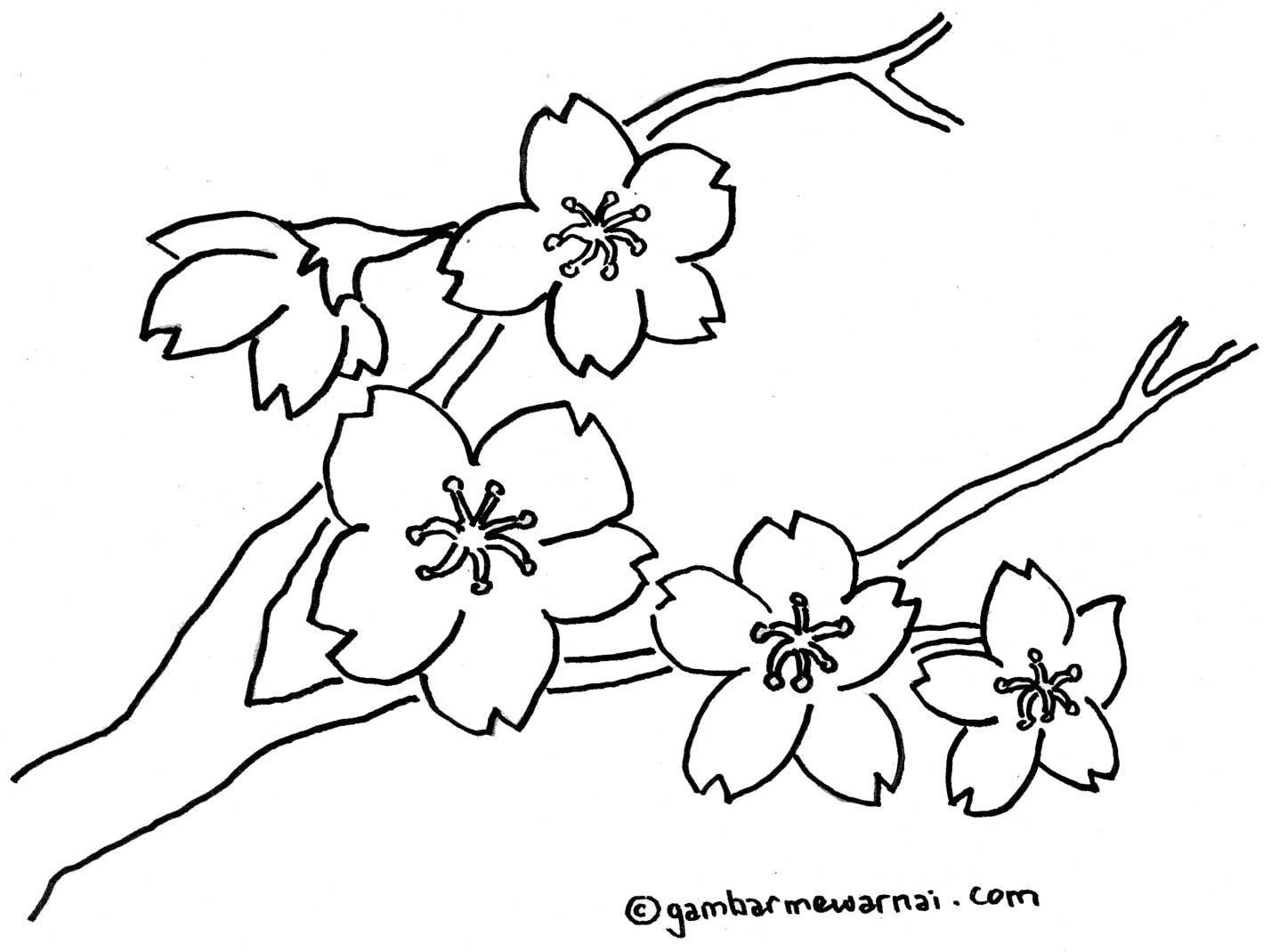 Amazing Gambar Bunga Sakura Untuk Diwarnai Ddeded Projects To