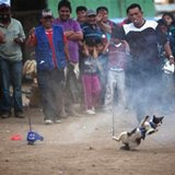news-world-latinamerica-20130920-LT-Peru-Cat-Eaters