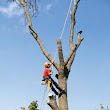 Arborist Reflects on 2013 Ice Storm - Electricity Today T&D Magazine