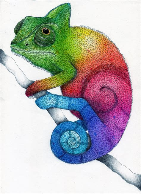 rainbow chameleon color pencil drawing  karen