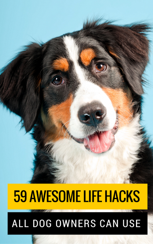 59 Simple Tips & Tricks All Dog Owners Should Know - Puppy Leaks