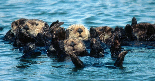 Where to See California's Most Cuddly Sea Creatures