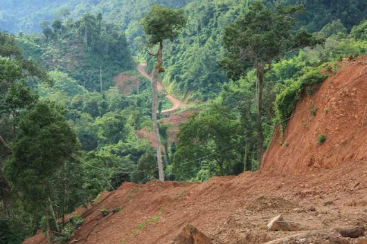 Stanford researchers find world forest carbon stocks overestimated