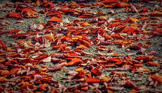 Fall Leaves #i0 by Leif Sohlman