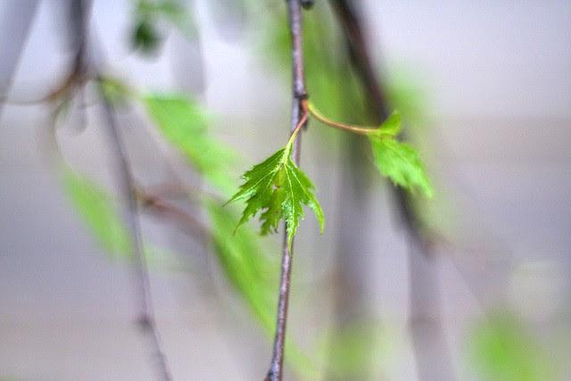 spring leaves (green)