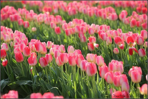Consider the Tulips of the Field