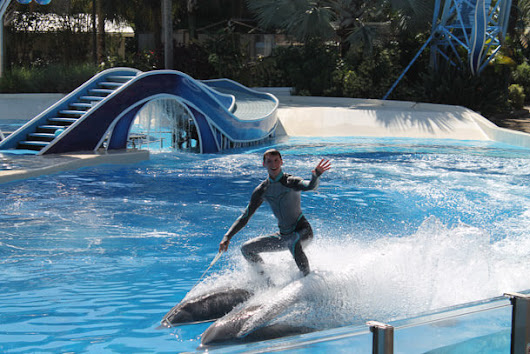 6 Reasons Why SeaWorld Sucks for Dolphins | peta2