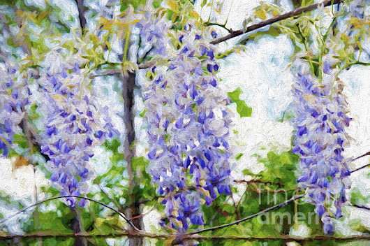 Wistful Wisteria 3 by Andee Photography