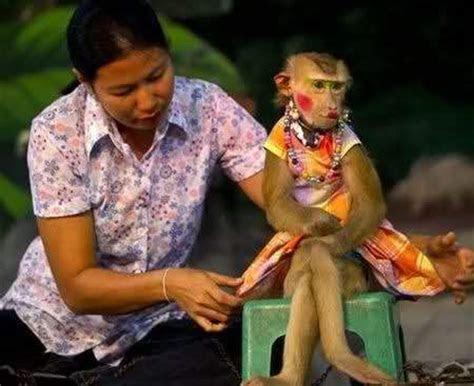 gambar monyet model lucu foto  gambar lucu