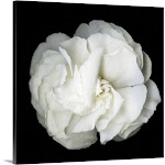 White Flower Blossom- Original Black And White Photograph | Canvas Wall Art | 20x20 | Great Big Canvas