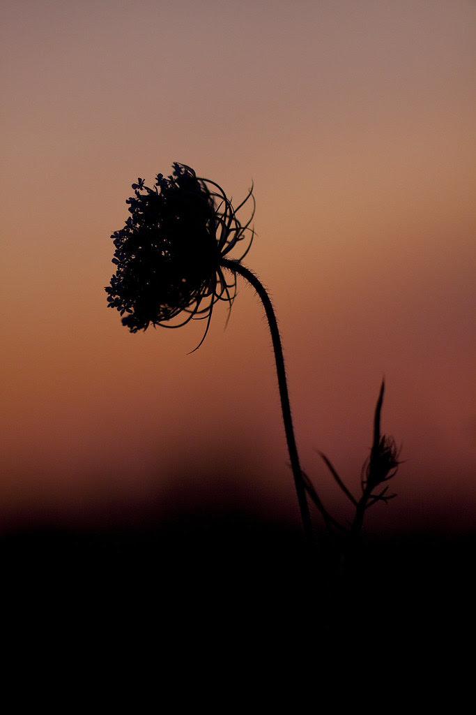 qal sunset2