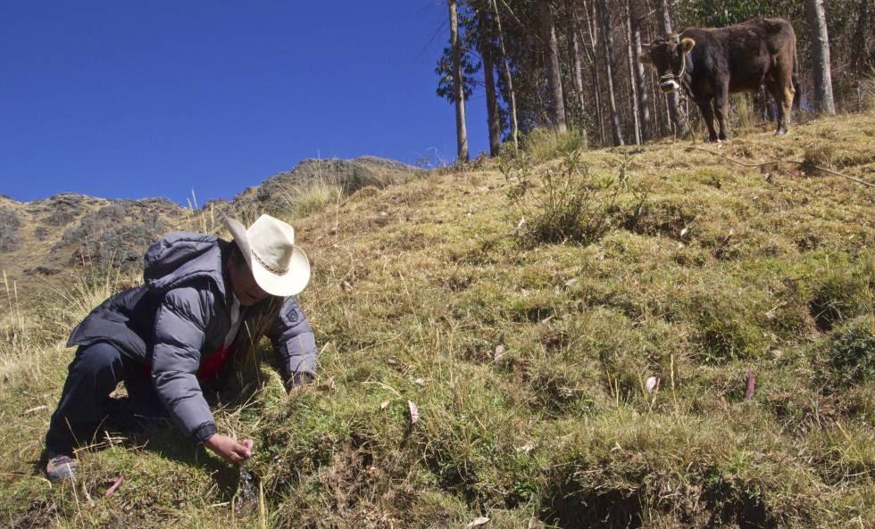Juan Suyo, director de Estudios y Proyectos Ambientales del Instituto del Manejo de Agua (IMA) del Gobierno regional Cuzco, muestra un manante recuperado en Chocopia gracias al proyecto de la laguna de Quescay.