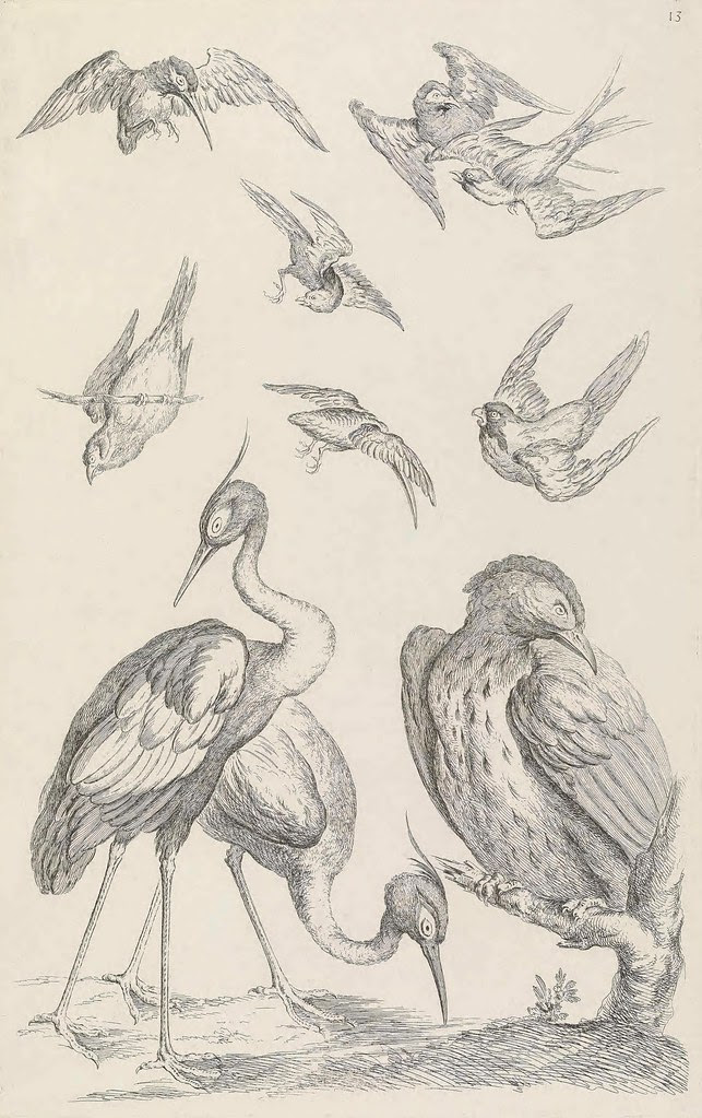 Huquier's 1730's bird sketches